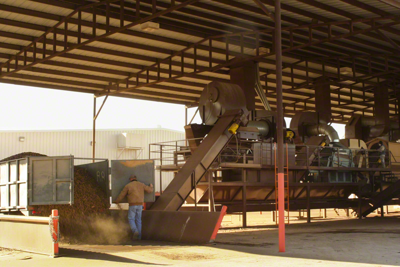 Pecan Harvest to the Processing Plant