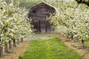 The Apple Barn