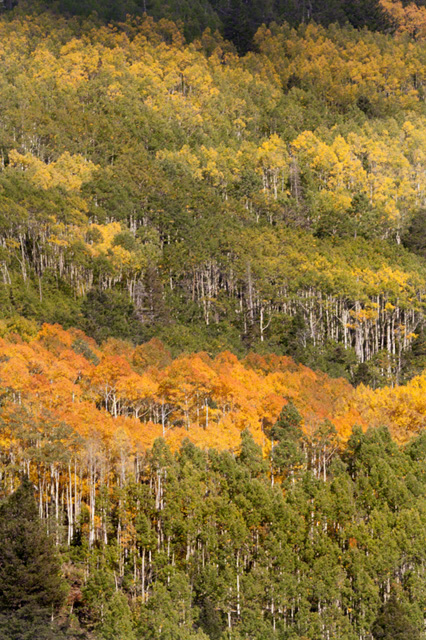 Zigzag of Fall Colors