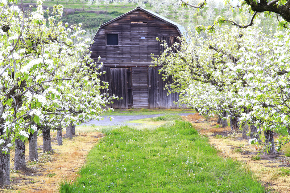 Apple Barn, Oregon